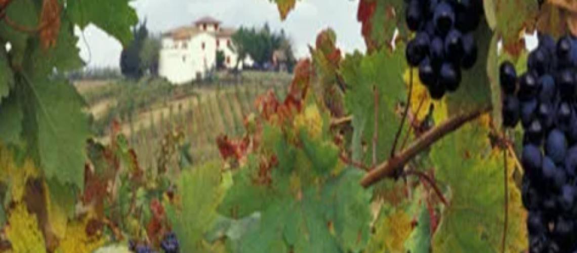 Bulletin - Vineyard